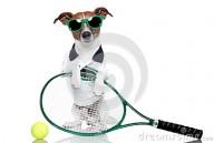 cane-di-tennis-